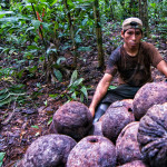 Counting 'cocos'