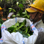 Collecting biomass
