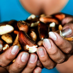 Peru's nut collectors