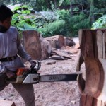 Cutting and chainsaw