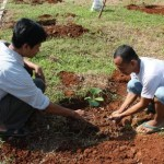 Planting and seedlings